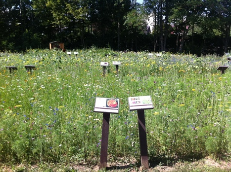 Le labyrinthe, un dédale de fleurs | Labyrinthes pédagogiques | Scoop.it