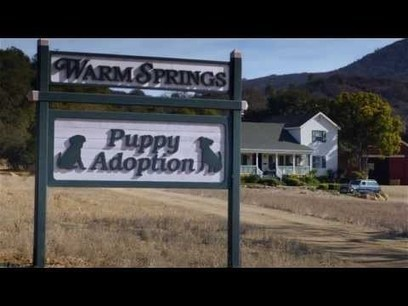 Budweiser Super Bowl XLVIII Commercial -- | My Funny hilarious Videos | Scoop.it