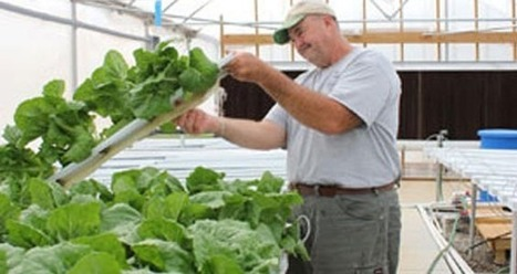 Water, water everywhere | The Leamington Grower Dedicated to ... | aeroponics | Scoop.it