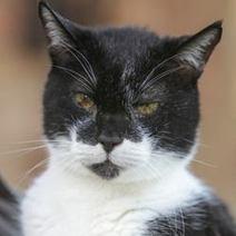 Le chat le plus vieux du monde ? (Vidéo) | CaniCatNews-actualité | Scoop.it