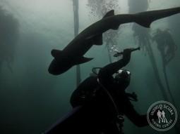 The Best Settings for GoPro Underwater Video | Indigo Scuba | SCUBA | Scoop.it