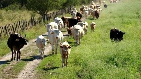 Colima Digital: Se agrava robo de ganado en Minatitlán | tipos de robo | Scoop.it