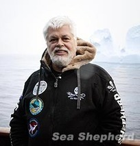 Sea Shepherd Australia :: A letter to the Japanese Prime Minister from Captain Paul Watson | Oceans and Wildlife | Scoop.it