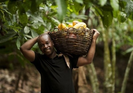 More opportunities for farmers through new Fairtrade Sourcing Programs | Peer2Politics | Scoop.it