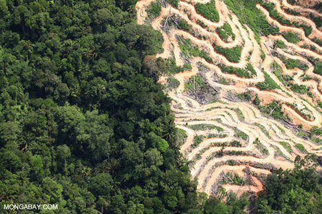 Entire planet will soon have rapid deforestation detection system | Biodiversity IS Life  – #Conservation #Ecosystems #Wildlife #Rivers #Forests #Environment | Scoop.it