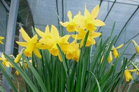 [CONSEIL JARDIN] Quand planter des tulipes et des dahlias?   Le jardin par Maison Blog   Scoop.it