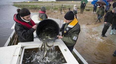Guerlédan. Les poissons de retour dans le lac après la vidange | Ma Bretagne | Scoop.it