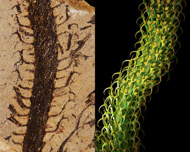 Graduate student brings extinct plants to life - UC Berkeley | Cool tidbits about plants | Scoop.it