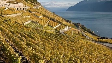 Vaud lance son projet d'oenotourisme   Oenotourisme   Scoop.it