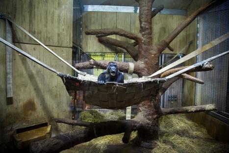 Un photographe capture la souffrance d'animaux dans les zoos - CitizenPost | Photographie | Scoop.it
