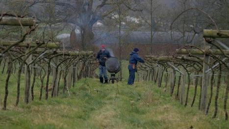 Global Warming Is Turning the Welsh Valleys into a #Wine Hotspot | Vitabella Wine Daily Gossip | Scoop.it