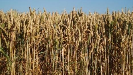 La Chine pourrait revoir sa politique de soutien aux prix agricoles intérieurs   Questions de développement ...   Scoop.it