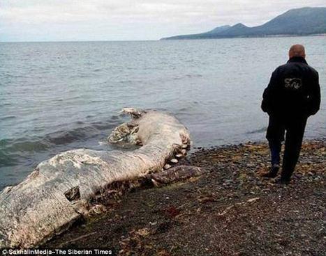 [FOTOS] Extraña criatura marina desconcierta a los científicos | Agua | Scoop.it