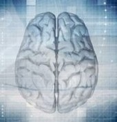 Brain Area Critical for Social Skills Discovered in Mouse Study ... | Social Skills | Scoop.it