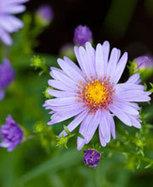 Jardin : les stars de l'automne | Immobilier | Scoop.it