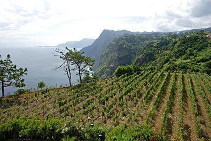 Madeira Wine | Vino in Love | Vino in Love | Scoop.it