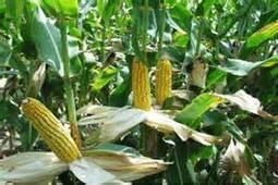 AJEDEK sensibilise sur la formation des jeunes sur l'agriculture – Agence Congolaise de Presse (ACP) | Agriculture en RDC - République Démocratique du Congo | Scoop.it