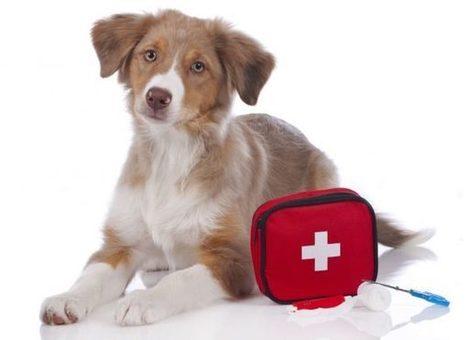 Cosa deve contenere il kit di pronto soccorso per cani   Bau Bau News - Amici a 4 Zampe   Scoop.it