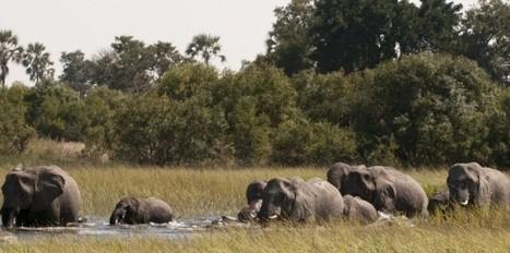 Des forêts d'Afrique sous surveillance - Le Nouvel Observateur | Recherche ou news en télédétection | Scoop.it