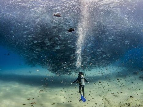 Spectacular photo of a scuba diver swimming under a massive fish tornado | SA Scuba Shack | Scoop.it