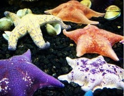 Downtown Aquarium: A refreshing experience | YourHub | Home Improvement - Landscaping | Scoop.it