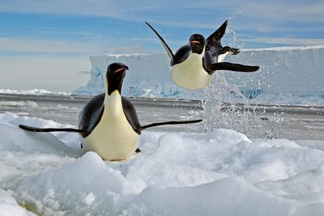 Amour, amitié, humour, fidélité... 14 faits surprenants chez les animaux - National Geographic | Nature & Civilization | Scoop.it