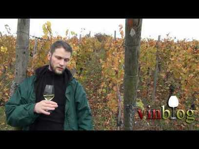 Alsace Grand Cru Kastelberg | vinblog | Vins et schistes | Scoop.it