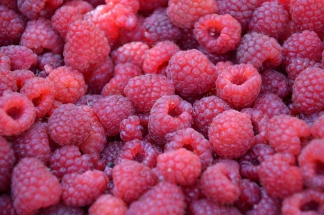 The Amazing Benefits of Raspberries + 5 Great Recipes | ♨ Family & Food ♨ | Scoop.it
