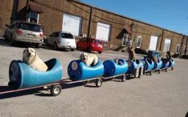 Man creates the 'dog train' for rescued and abandoned dogs | Quite Interesting News | Scoop.it
