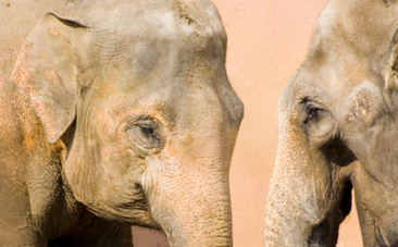 This Is Huge: India Bans Elephants in Circuses | This Gives Me Hope | Scoop.it