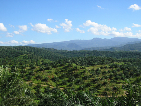 Fin de l'avantage fiscal pour l'huile de palme ? • Néoplanète | Chronique d'un pays où il ne se passe rien... ou presque ! | Scoop.it