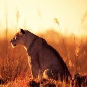 African Safaris – Astonishing Images by Mario Moreno | Europe & Africa  E&A | Scoop.it