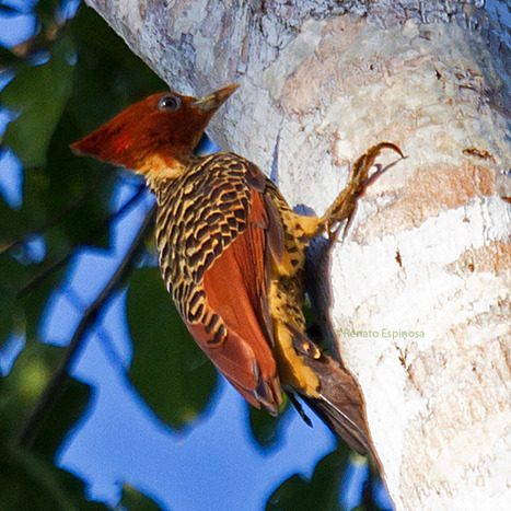 Sani Lodge Birdwatching - 10000 Birds   Birds and Birding   Scoop.it
