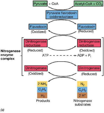 Nutrición microbiana | Principios de Microbiología Marina | Scoop.it