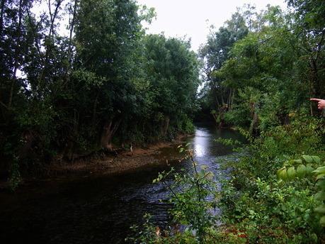 Précieuses forêts riveraines: les ripisylves  | décroissance | Scoop.it