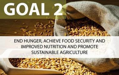 Sustainable Development Goal 2: End hunger, achieve food security | Disaster | Scoop.it
