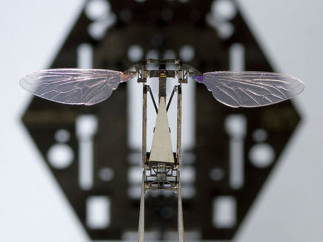 Rise Of The Robotic Bees | Share Some Love Today | Scoop.it