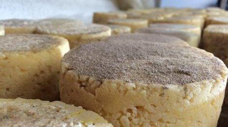 Haute-Loire : le fromage aux artisous part en quête d'une AOP | Actualités de l'élevage | Scoop.it