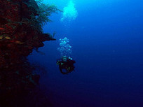 Be taught Nice Travel Recommendation From Travel Experts | Ultimate Dive and Travel | Scoop.it