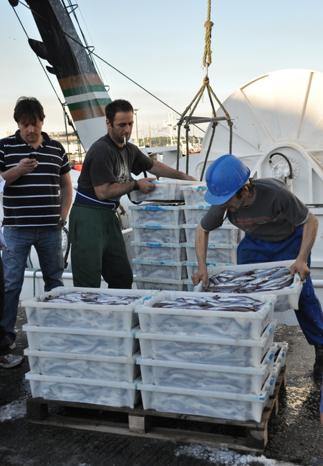 EUROPEAN UNION: Reports on the fishing fleet, aquaculture and fish processing sectors | Fish  England | Scoop.it
