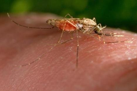 Investigational Malaria Vaccine Found Safe and Protective | CDN Public Policy | Scoop.it