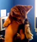 Newborn Kitten Care | Ask The Cat Doctor | Scoop.it