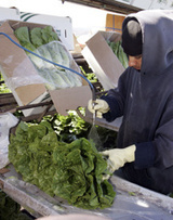 Study says leafy greens top food poisoning source | Yahoo! Health | Eco Living, Marketing, News | Scoop.it