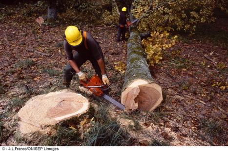 ouvrier(ière) forestier(ière) | Bûcheron | Scoop.it