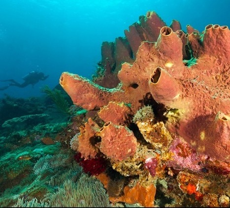 First animal was likely sea sponge | EarthSky.org | Sustainable Futures | Scoop.it
