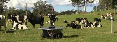 Robots Herd Cattle, Transform Industry | Robolution Capital | Scoop.it