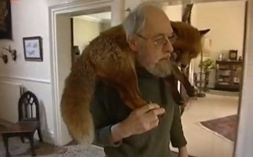 Daily Cute: Man and Fox - A Love Story | This Gives Me Hope | Scoop.it