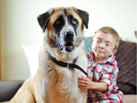 Cutest at Crufts and beyond: It's the dogs of awwwwww... - The Independent | Cute Dogs | Scoop.it