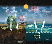 Remous en écologie virale | Alimentation Santé Environnement | Scoop.it