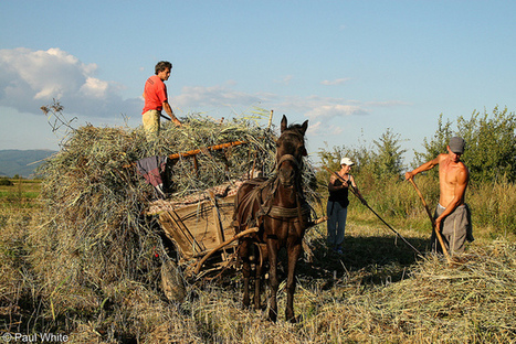 Bringing in the hay.... | Journalism - Photography - Stories | Scoop.it